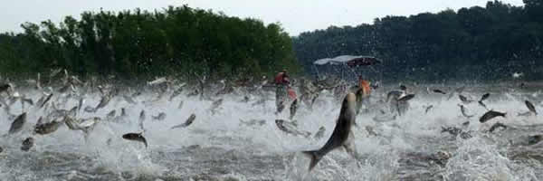 Asian Carp Watch